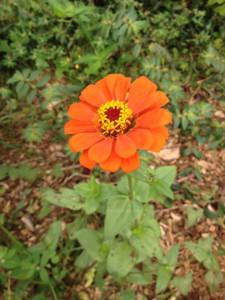 OrangeAloha