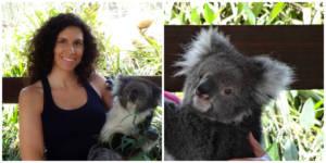 KoalaCollage