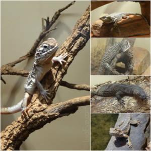 ReptileCollage1
