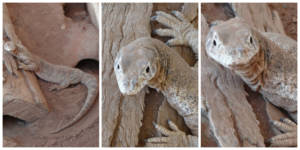 ReptileCollage3