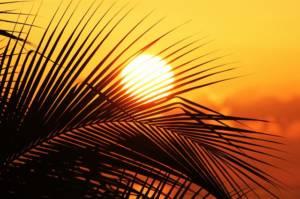 sun-of-jamaica-910070_640